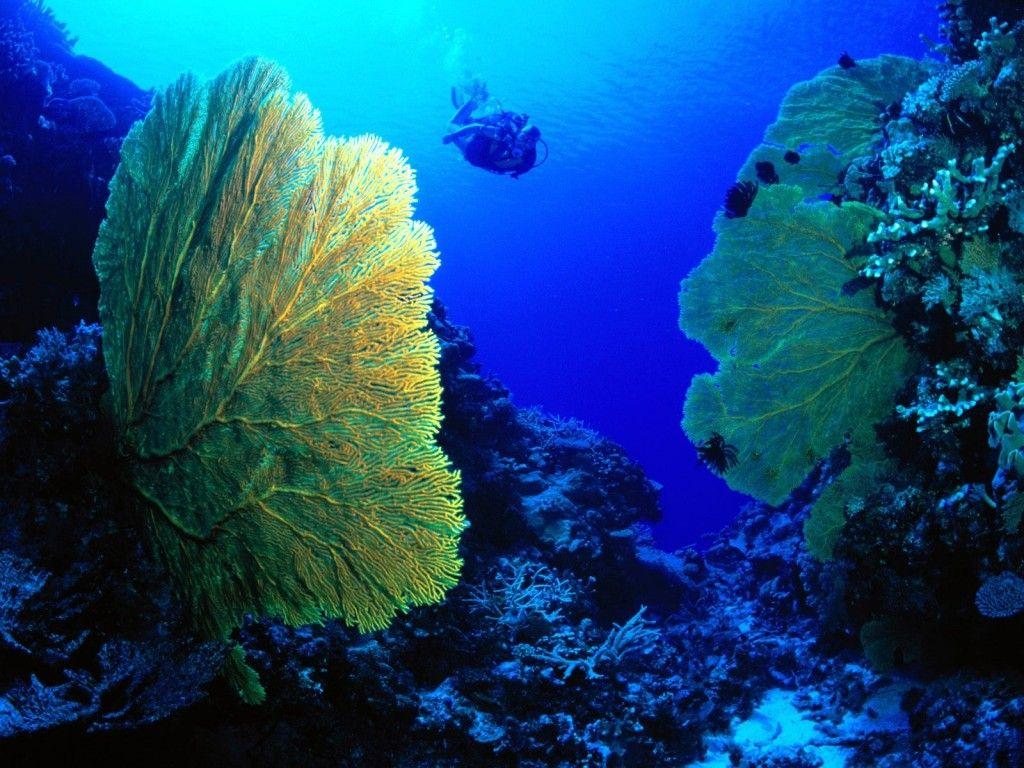 islas medas buceo