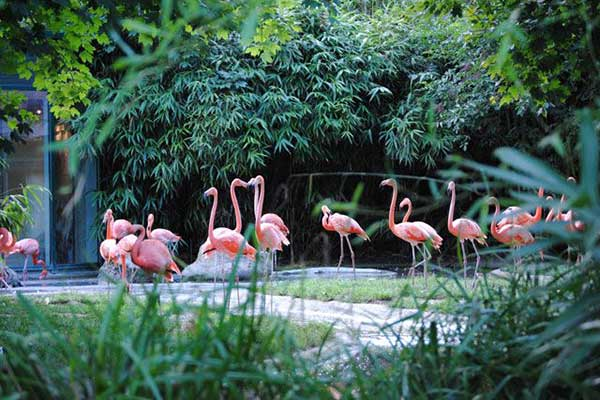zoo viena
