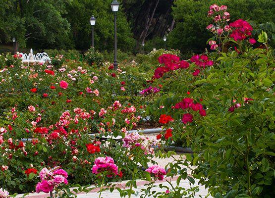 rosaleda-parque-oeste