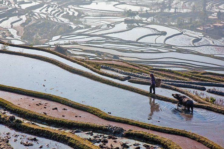 Terrazas de arroz de Honghe Hani en China 2