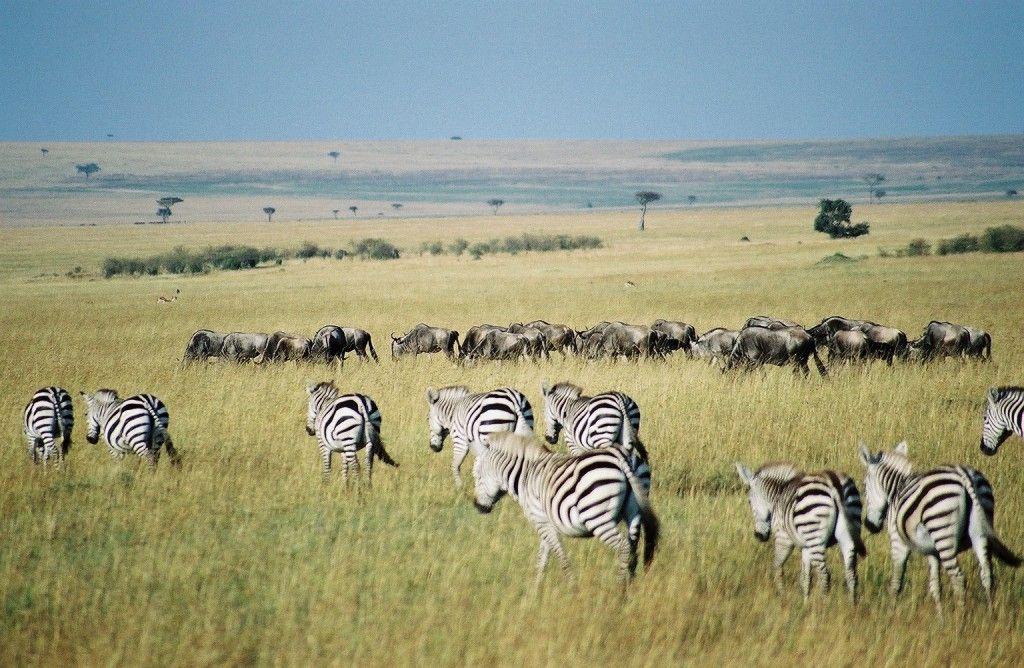 tour áfrica kenia
