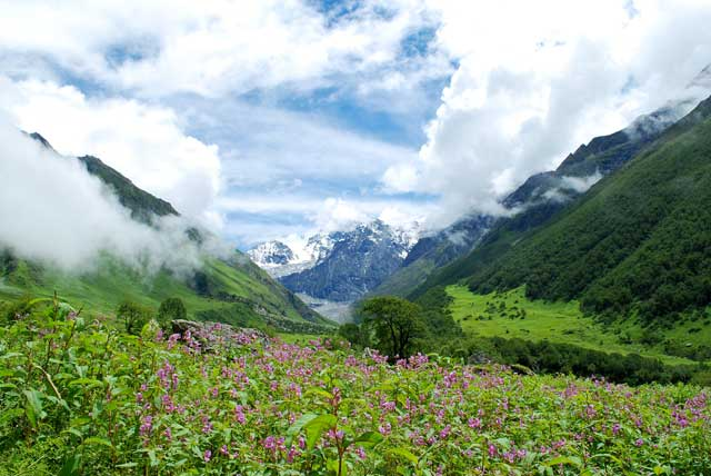 valle-de-las-flores