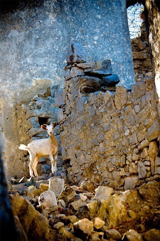cabra en akri grecia