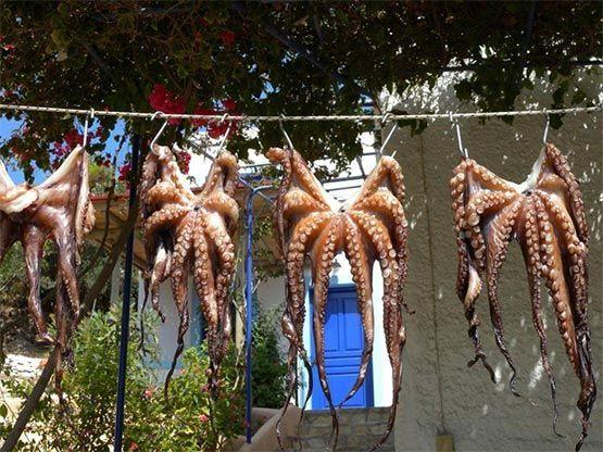 pulpos tendidos en islas solitarias de grecia