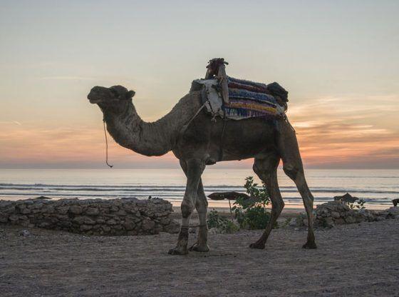 Mejores playas de Marruecos