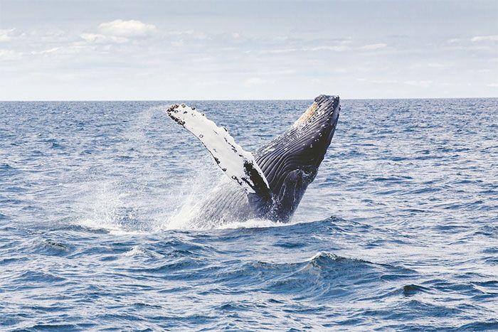 ver ballenas baja california