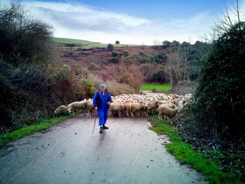 La Rioja pastores