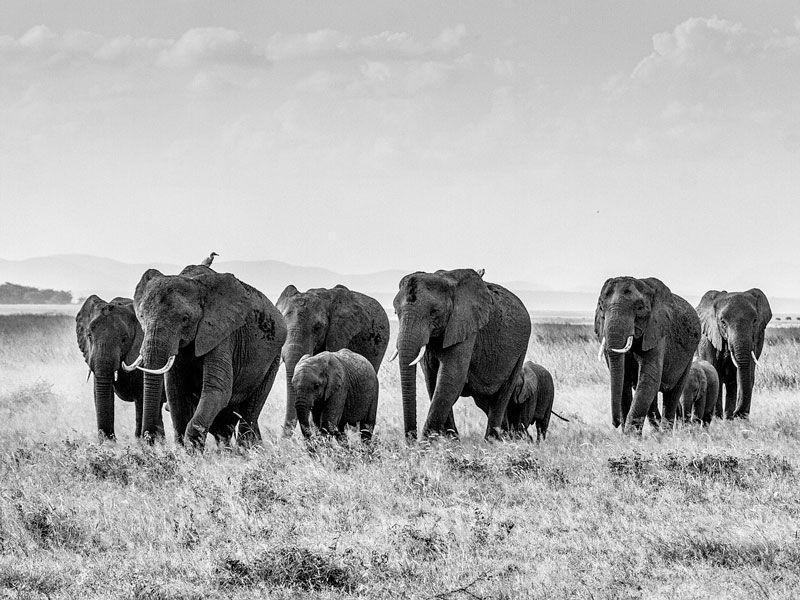 visado para viajar a kenia